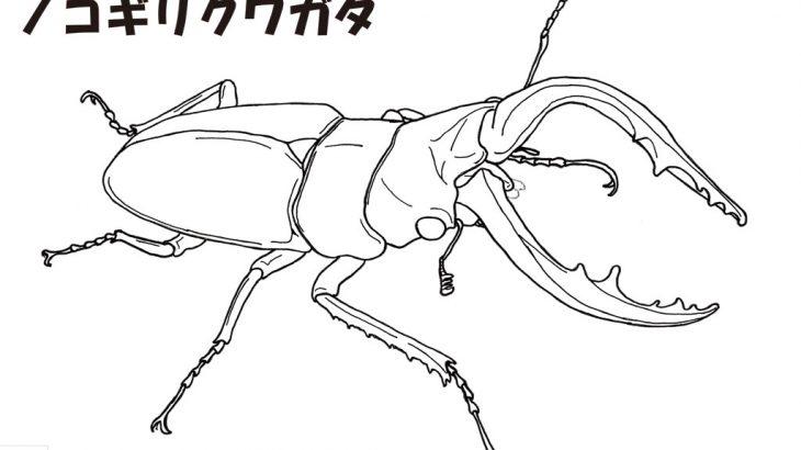 姉妹サイト「レヂヲのいきものぬりえずかんキッズ」をオープン!いきものぬりえもあるよ!